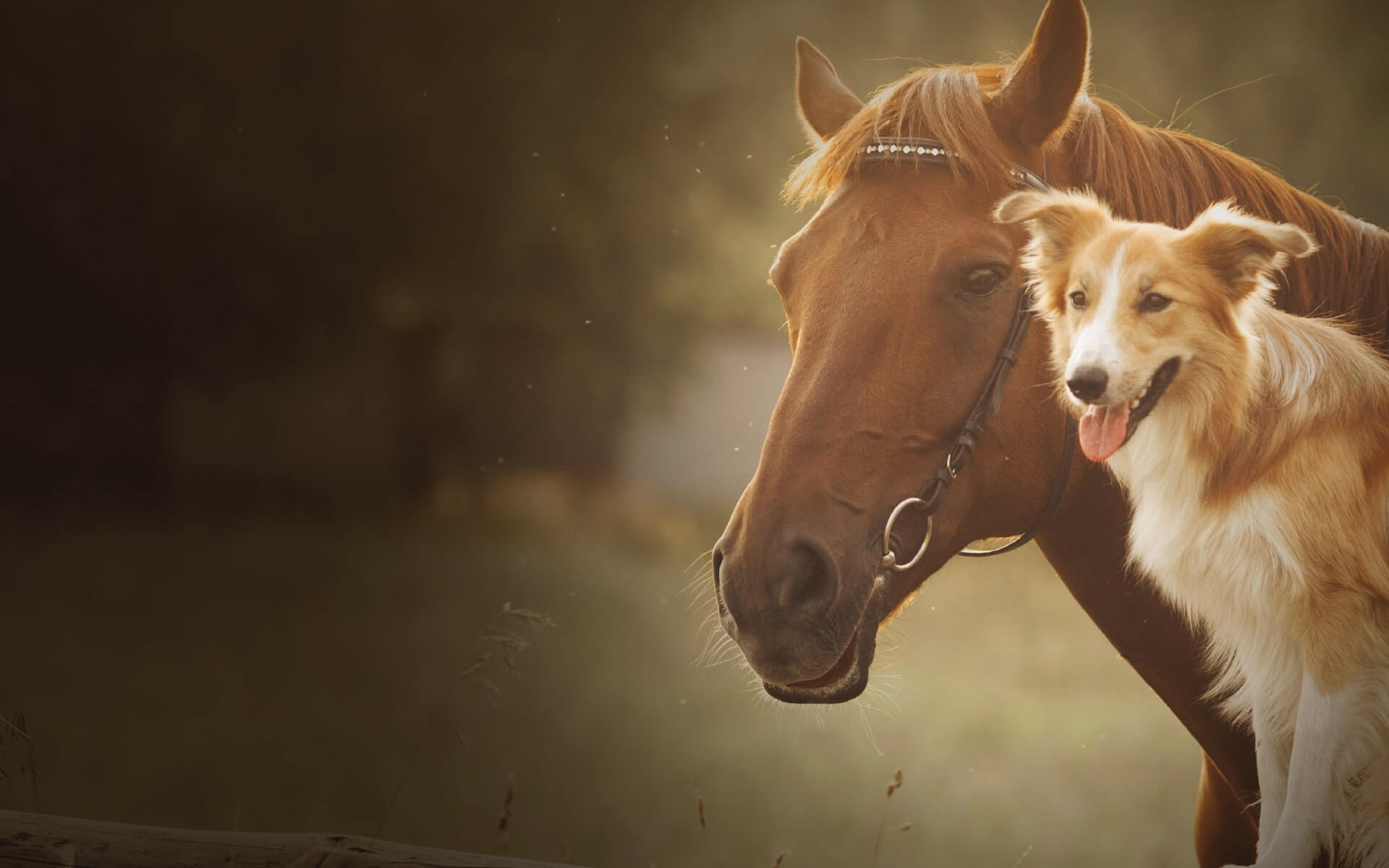 Image of Dog and Horse