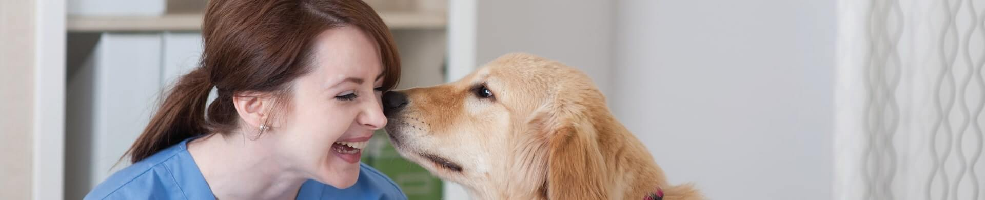 Pet therapy banner image