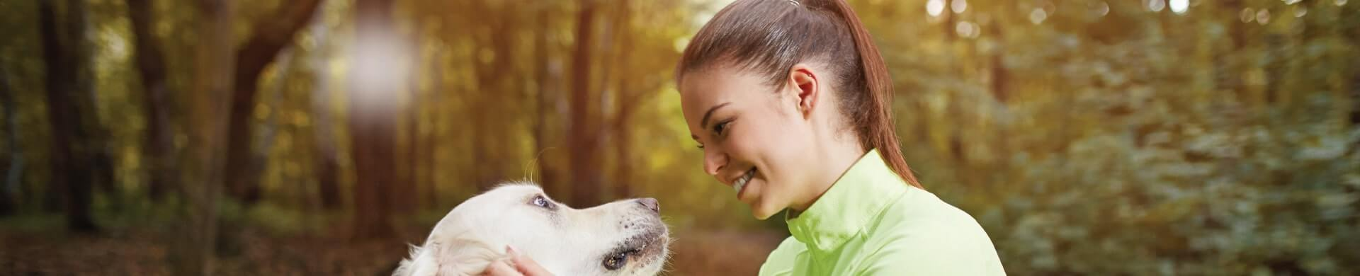 Pet And Horse Owners What Can Be Treated With Vetstem Cells What Is The Process